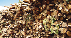 pp-pulp-production-woodlogs